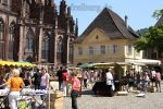 muensterplatz_8633.jpg